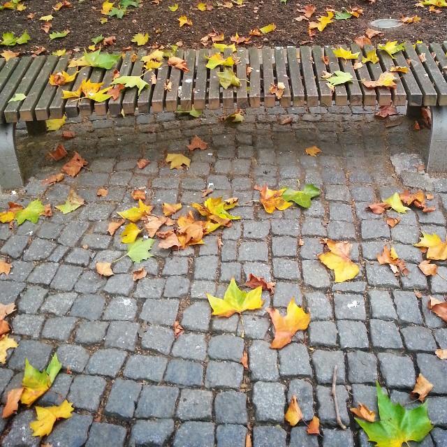Bunte Blätter Schar - Herbst in Dresden