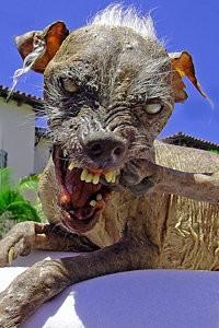 sam – häßlichster hund