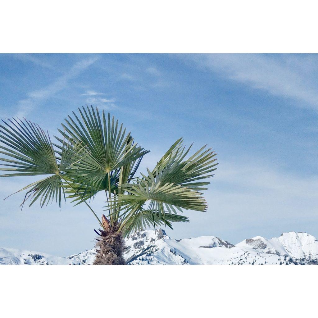 Palm & Snow