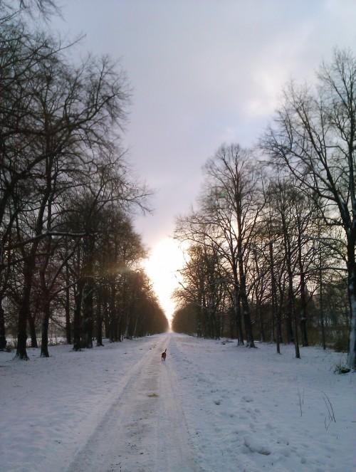 Winter Ostragehege Dresden